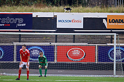 MERTHYR TYDFIL, WALES - Thursday, November 2, 2017: A black and white cat walks along a wall during an Under-18 Academy Representative Friendly match between Wales and Newport County at Penydarren Park. (Pic by David Rawcliffe/Propaganda)