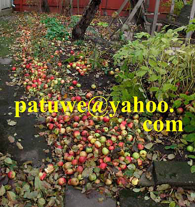 Finland Rauma old town apples on earth