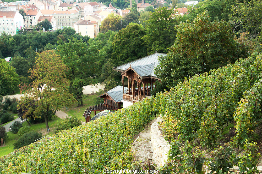 View toward Prague district 10 from the slopes at Havlickova Sady Park in Prague 2, with the Grebovka wines.<br />  One of the restored vineyards where you can try wine in the middle of the place where the vines are located is the Grébovka vineyard on the steep slopes of Nuselský Valley. Here, in nearby Havlíčkové sady and on Peace Square, the annual Grébovka Vintage will be held. The festivities will include supporting programs and competitions, a historical market place and, of course, degustation of wine and fermented wine with service in period costumes.