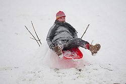 © Licensed to London News Pictures. 23/03/2013., Sheffield. People sledging in Meersbrook Park, Sheffield after two days of heavy snow. Photo credit : David Mirzoeff/LNP