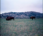 Wichita Mountain Wildlife Refuge near Lawton, OK