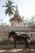 A horse and carriage waits for customers in the street in Nyuangshwe, Shan state, Myanmar (Burma).