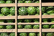 Uzbekistan, Bukhara. Watermelons.