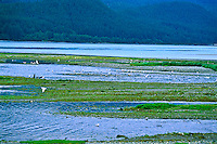 Sheep Creek enters Gastineau Channel.  In late summer these waters are full Chum Salmon.  South of Juneau, Alaska.