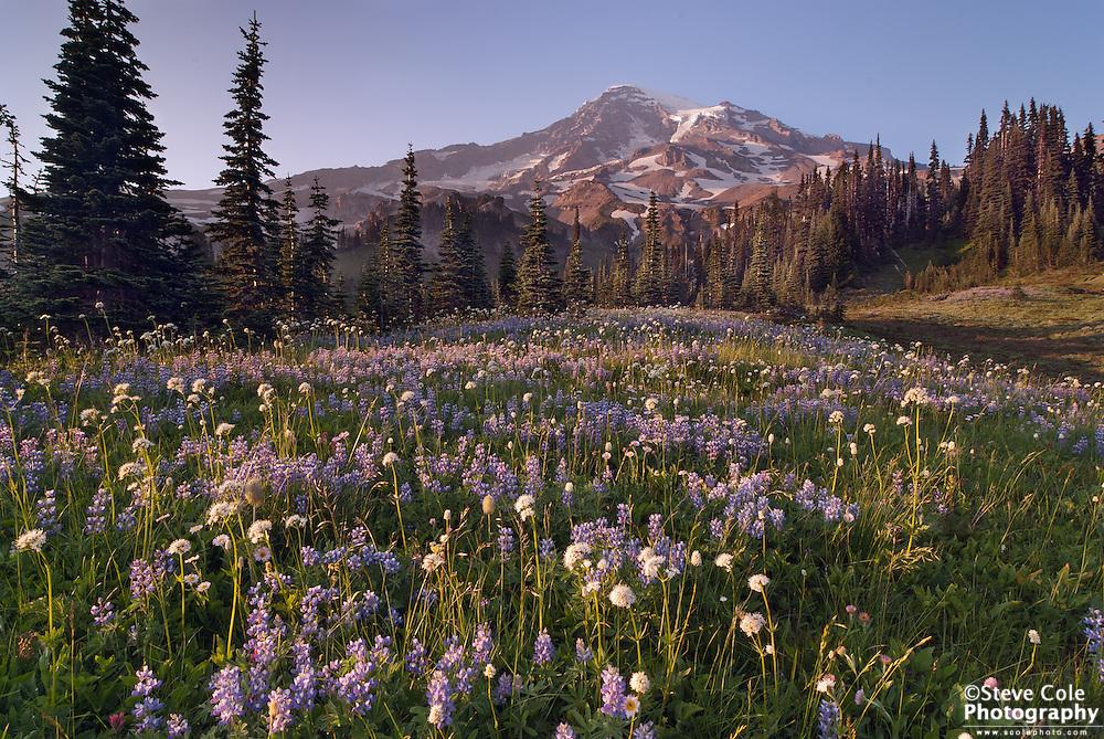 Van Trump Park - Mount Rainier National Park