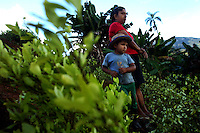 A mother and her young son look out on their field of coca plants that were manually eradicated by workers hired by the Colombian government, in La Via Alta, in a remote area of the southern Colombian state of Nariño, on Friday, June 22, 2007. (Photo/Scott Dalton)