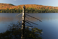 http://Duncan.co/dead-tree-at-rock-lake