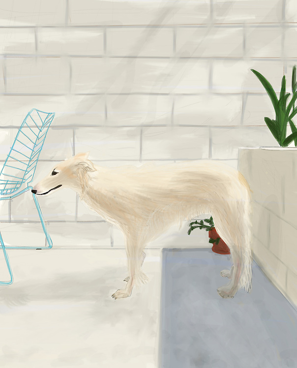 A dog stands on a backyard Patio