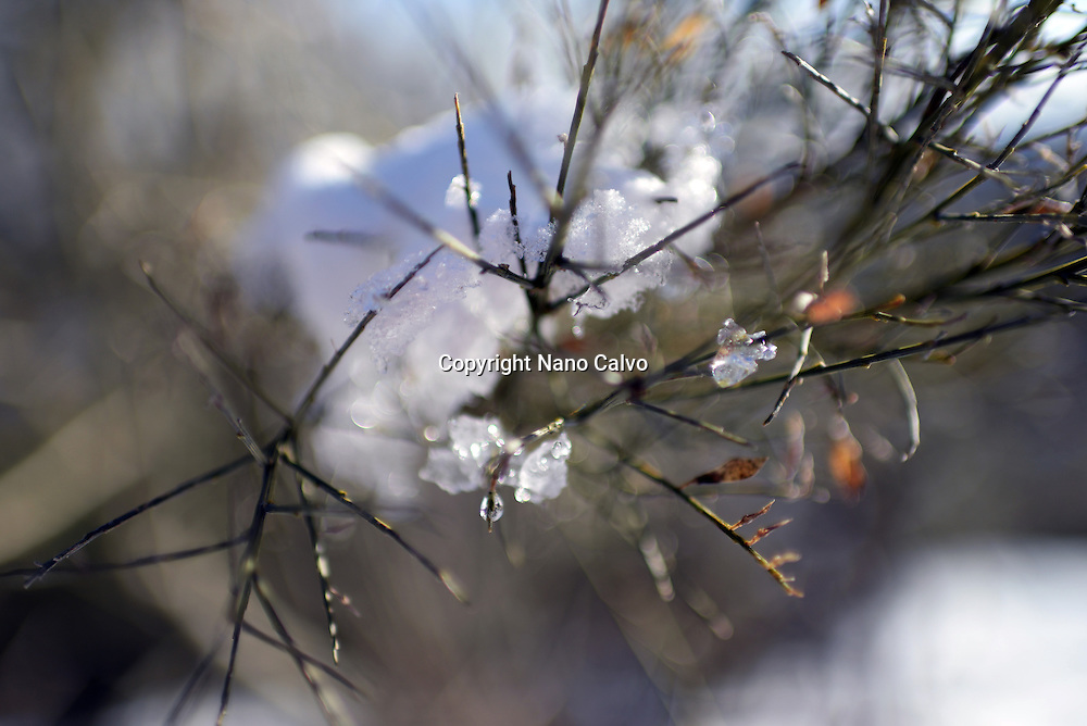 Ice on tree leaves in winter landscape, Vigo de Sanabria