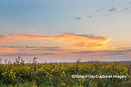 63893-03801 Sunrise and prairie Prairie Ridge State Natural Area Marion Co. IL