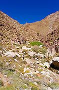 Hikers in Borrego Palm Canyon, Anza-Borrego Desert State Park, California USA