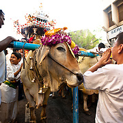 I am pretty sure he is worshiping the chariot and not the cow. Though it could be both.
