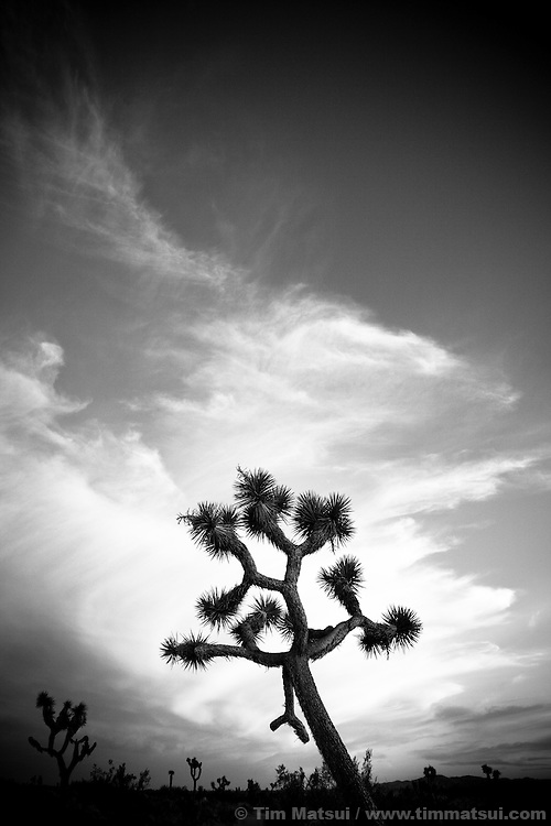 Palm Springs, California, and surrounding area including Joshua Tree National Monument. Joshua Tree National Monument, near Palm Springs, California.