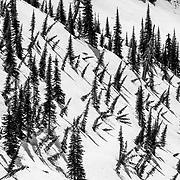 Fir Tree patterns in Glacier National Park.