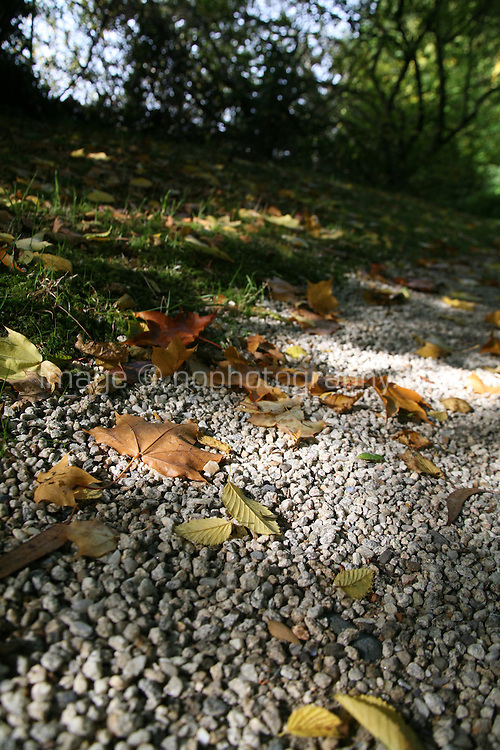 Autumn leaves on the ground in Wicklow Ireland