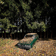 Vintage car cemetery.