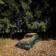 Vintage car cemetery