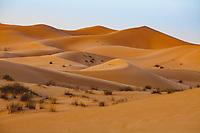 In the desert of Margham