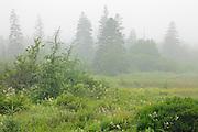 Castalia Marsh in fog<br /> Grand Manan Island<br /> New Brunswick<br /> Canada
