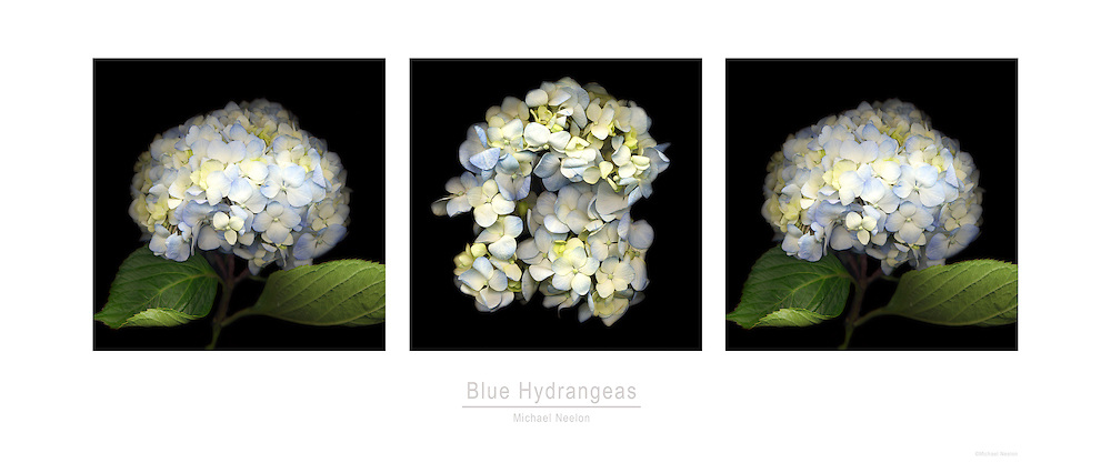 Fine Art Floral Triptych Poster<br />