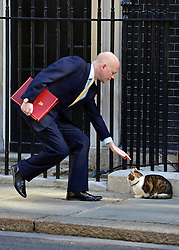 © Licensed to London News Pictures. 04/06/2013. Westminster, UK. William Hague, Conservative MP, Secretary of State for Foreign and Commonwealth Affairs stroke Larry the Downing Street cat. MP's on Downing Street today 4th June 2013. Photo credit : Stephen Simpson/LNP