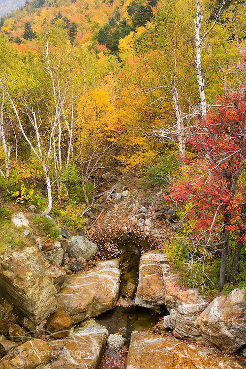The Saco River in fall in New Hampshire's Crawford Notch State Park.
