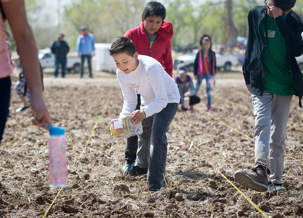 Javier Gonzalez, front center, sows salt grass seeds with classmates Jose Medina, back center, and Edgar Marquez, right, the 350 grade school students who learned about farming and the migrant farm workers' movement at La Plazita Gardens at Sanchez Farm Open Space in Albuquerque's South Valley. This was the 8th annual Dolores Huerta Day of Service and Learning. (Marla Brose/Albuquerque Journal)