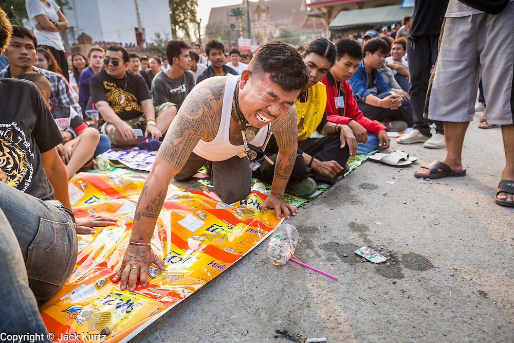 "15 MARCH 2014 - NAKHON CHAI SI, NAKHON PATHOM, THAILAND:  A man channels a tiger, his spirit animal, at the Wat Bang Phra tattoo festival. Wat Bang Phra is the best known ""Sak Yant"" tattoo temple in Thailand. It's located in Nakhon Pathom province, about 40 miles from Bangkok. The tattoos are given with hollow stainless steel needles and are thought to possess magical powers of protection. The tattoos, which are given by Buddhist monks, are popular with soldiers, policeman and gangsters, people who generally live in harm's way. The tattoo must be activated to remain powerful and the annual Wai Khru Ceremony (tattoo festival) at the temple draws thousands of devotees who come to the temple to activate or renew the tattoos. People go into trance like states and then assume the personality of their tattoo, so people with tiger tattoos assume the personality of a tiger, people with monkey tattoos take on the personality of a monkey and so on. In recent years the tattoo festival has become popular with tourists who make the trip to Nakorn Pathom province to see a side of ""exotic"" Thailand.  PHOTO BY JACK KURTZ"