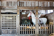 Minami-Soma, Fukushima prefecture, July 25 2015 - Local Shinto shrine in Minami-Soma during Nomaoi, a festival of samurai riding horses.<br /> The Soma nomaoi is said to be a 1000-year-old traditional festival. It was held in 2011, a few months after the nuclear disaster, but only a few local horses were available.