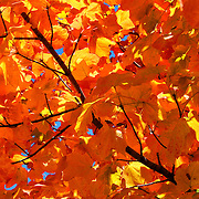 """Autumnal Eye Candy""<br />