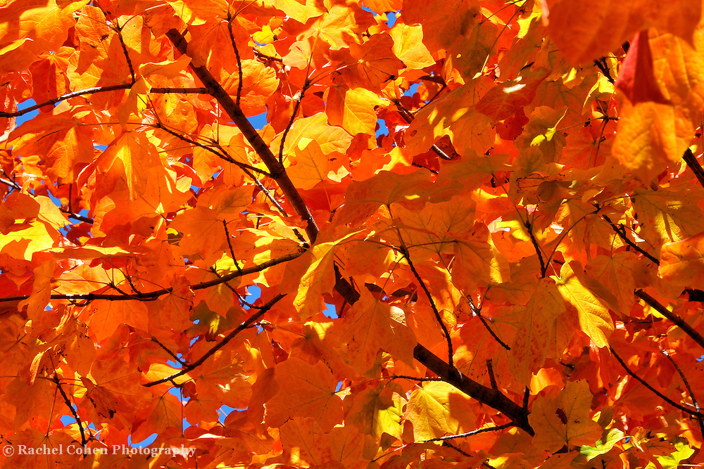 &quot;Autumnal Eye Candy&quot;<br />