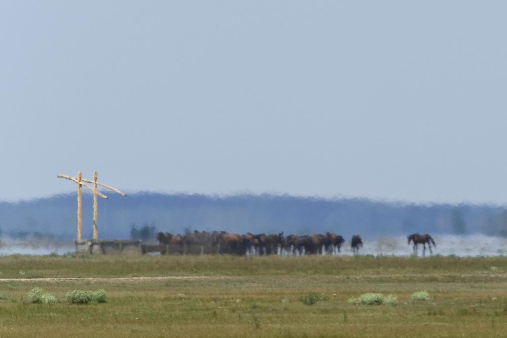 Typical Hortobagy landscape with mirage (fata morgana) and stud,  Hortobagy National Park, Hungary