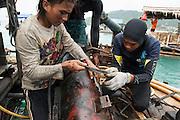 Miners repair the rusty air pump that is supposed to provide the diver with oxygen on an improvised offshore tin mining platform. They can win 15 kg of tin per day. Tin mines offshore near the fishing village Reboh. These mines destroy the seabed, coral reefs and kill fish. Bangka Island (Indonesia) is devastated by illegal tin mines. The demand for tin has increased due to its use in smart phones and tablets.<br /> <br /> Mineurs réparent la pompe à air rouillé qui est censé fournir le plongeur en oxygène. Plate-forme improvisée d'extraction de l'étain en mer. Ils peuvent extraire 15 kilo d'étain par jour. Mines d'étain off shore au large de Reboh, village de pecheurs. Ces mines détruisent les fonds sous marins, les barrières de corail et tuent les poissons. L'île de Bangka (Indonésie) est dévastée par des mines d'étain sauvages. la demande de l'étain a explosé à cause de son utilisation dans les smartphones et tablettes.