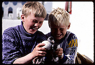 Two boys introduce rescued puffin chicks to each other; kids free the birds at shore on Heimaey. Iceland