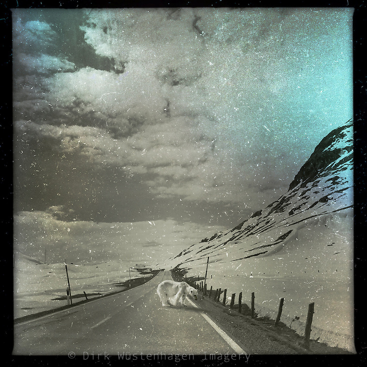 Surreal road scene - polar bear crossing!<br />