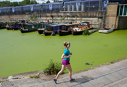 © Licensed to London News Pictures. 17/07/2019. London, UK. The surface of Regent's Canal is covered in Algae, caused by recent warm weather in the capital. According to the Met Office, rain is forecast across the country during the next few days. Photo credit: Dinendra Haria/LNP