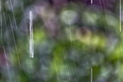 The Effect of Shutter Speed on Falling Rain Set 2-#3