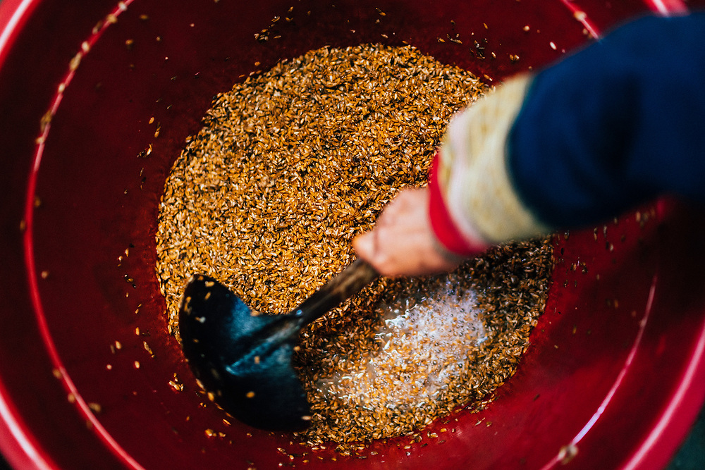 Fermenting grains for rice wine in northern Vietnam.
