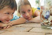 Boy and girl (7-9) looking at shells in jar close-up
