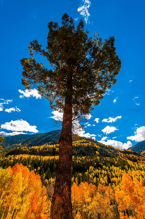Fall color, San Juan Mountains, near Telluride, southwest Colorado USA.