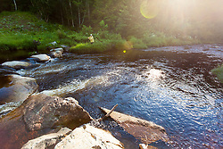 A man fly-fishing for brook trout in Cold Stream in Maine's Northern Forest. West Forks. Recently restored stream bed.