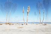 Salton Sea now and then
