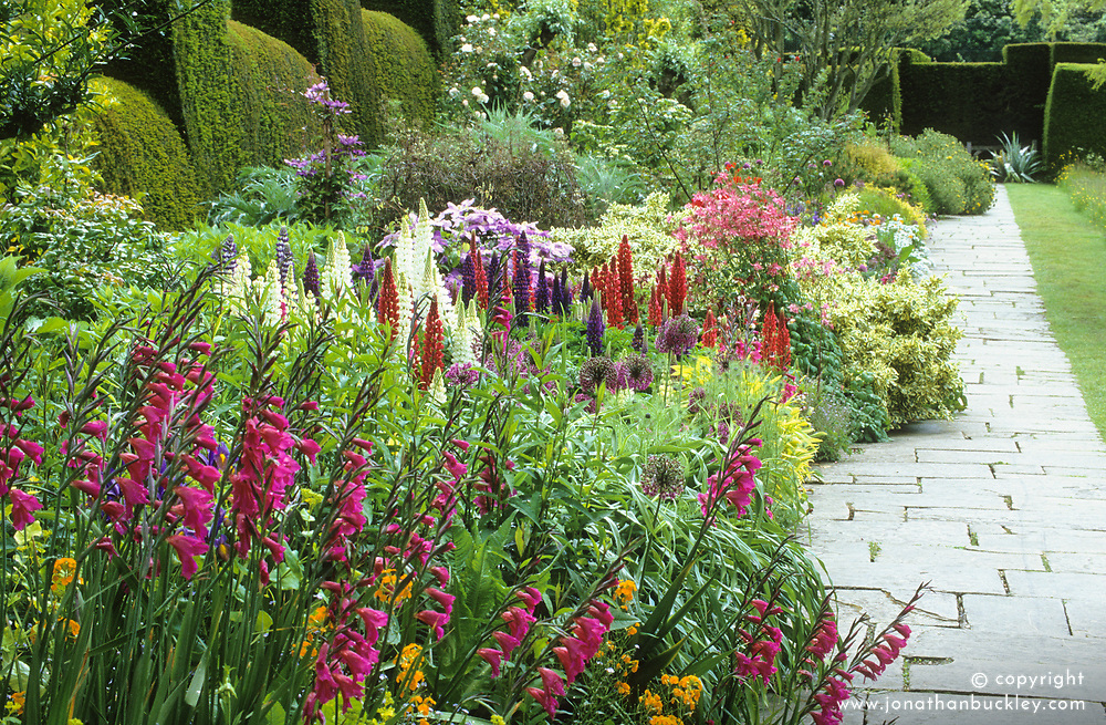 The long border at Great Dixter in early summer with Gladiolus communis ssp byzantinus, lupins and aquilegias.