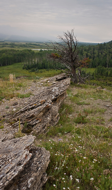 An on going project studying the Whaleback region of Southern Alberta.