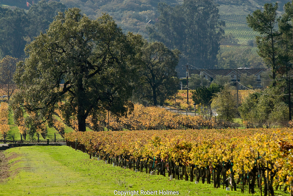 Sonoma Valley vineyards, California