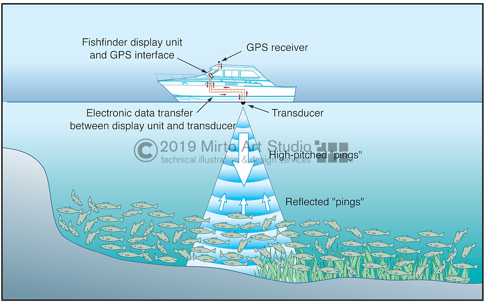 A vector illustration showing how a fishfinder transducer on a fishing boat works.