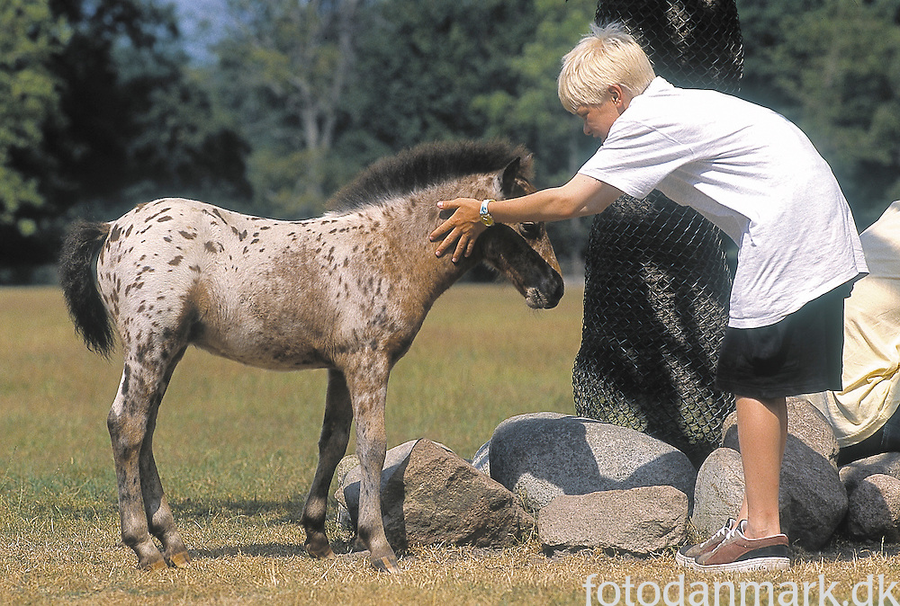 Blond boy petting small horse in Knuthenborg