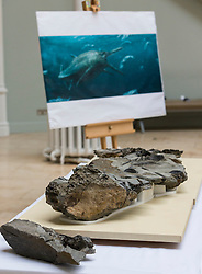 The fossilised skeleton of a Jurassic sea creature found on Skye in 1966 has been unveiled by scientists for the first time. Named the Storr Lochs Monster, it is the most complete skeleton of a sea-living reptile from the dinosaur age ever to be found in Scotland and has been extracted from the rock that encased it for millions of years.