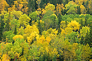 North Shore of Lake Superior..Northern Ontario.October, 2005.                   The forests in this region mark the border with the Carolinian forests to the south and the boreal forests to the north...Copyright Garth Lenz. Contact: lenz@islandnet.com www.garthlenz.com