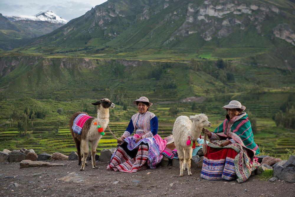 South America,Peru, Colca Canyon, two local women with alpacas